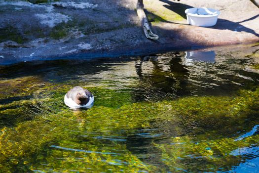 Waterfowl at Zoo in Water