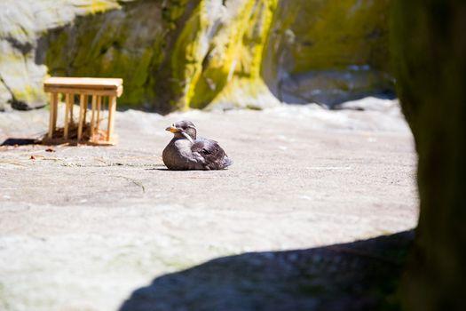 Birds at Zoo