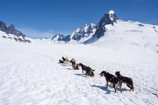 Dog Sledding - Mendenhall Glacier Juneau Ice Field Alaska - Travel Destination