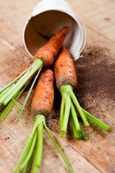 fresh carrots bunch and bucket