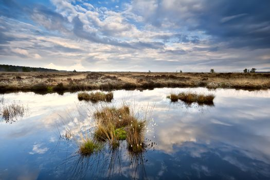 sky reflections in swamp water