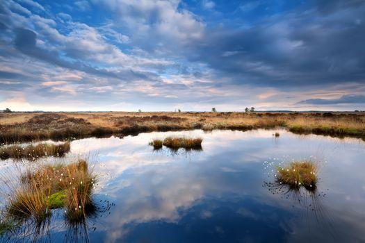 blue cloudscape over swamp