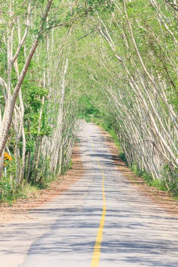 The road through the National Park,