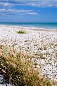 beach of Adriatic Sea, Italy
