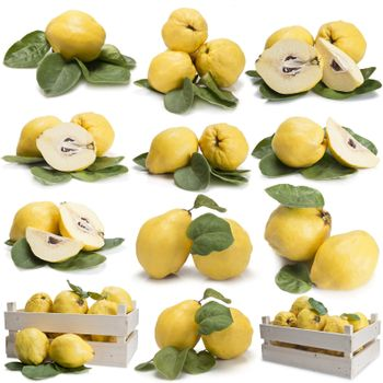 Set of photographs of quinces with leaves isolated over a white background