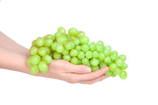 Cluster of grapes on hands