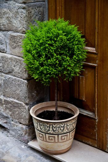 old entrance door and plant
