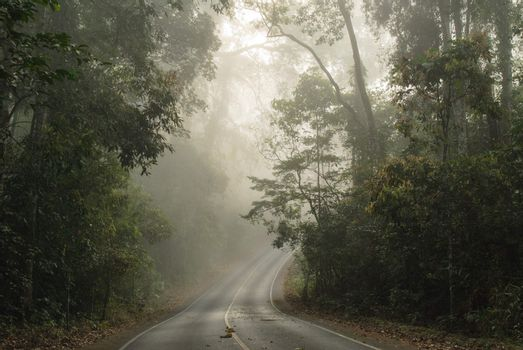 Spooky scene from a tropical forest.Thailand