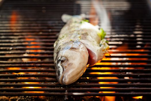 Sea Bass On The Grill