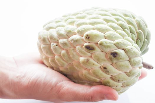 Fresh custard apple hand hold isolated on white background