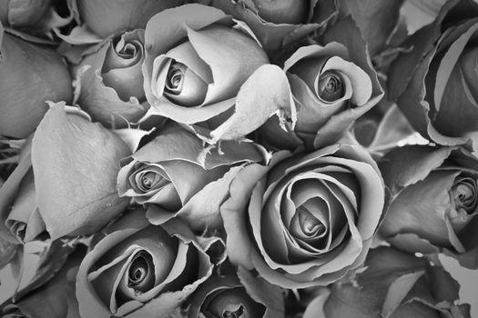 sorrow rose