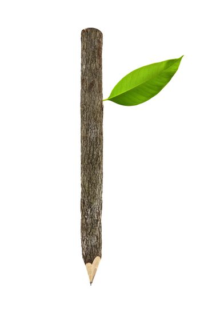 bark pencil
