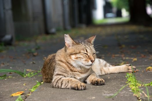Stray tabby cat