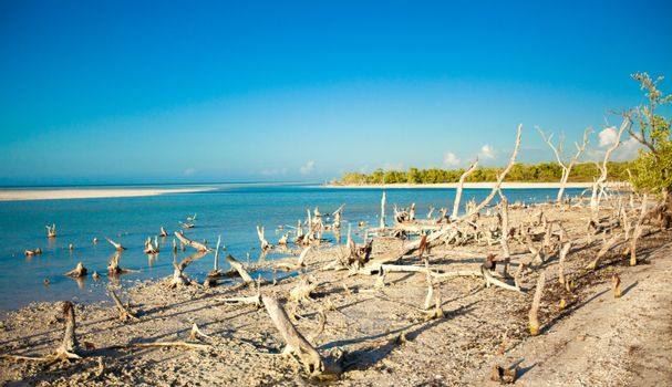 exotic view of the Gulf of Mexico on the island Holbox