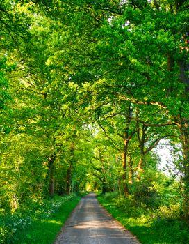 Green oak road