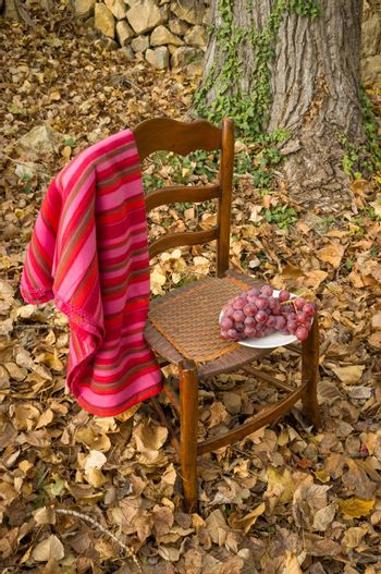 Grapes on an old chair against a fall background