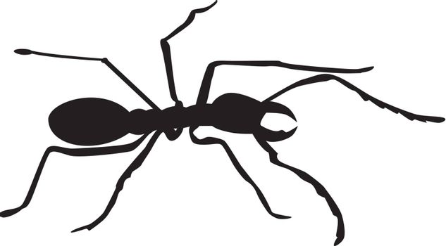 Illustration of an ant silhouette on white background