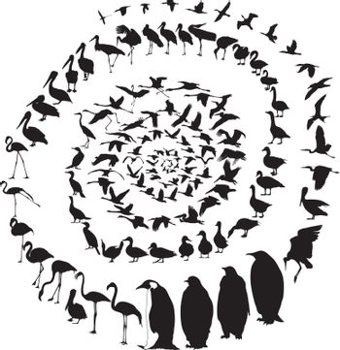 Birds Waterfowl in spiral