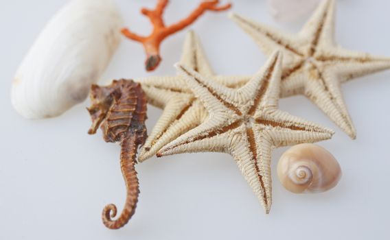 Starfishes, seahorse, coral and shells over white