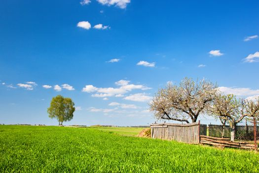 Countryside landscape during spring. Grassy field with trees and wooden fence