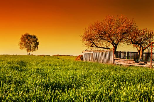 Countryside orchard landscape during spring at sunset. Grassy field with trees and wooden fence