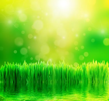 Green nature background. Fresh grass, water reflection and sunny bokeh background.