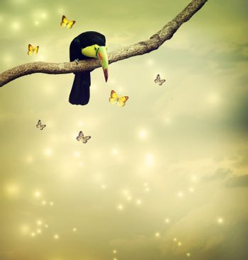 Toucan with butterflies