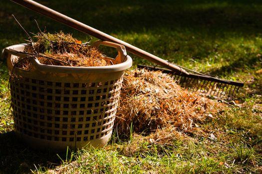 gardening in autumn