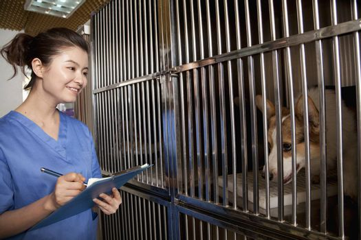 Veterinarian filling out medical chart