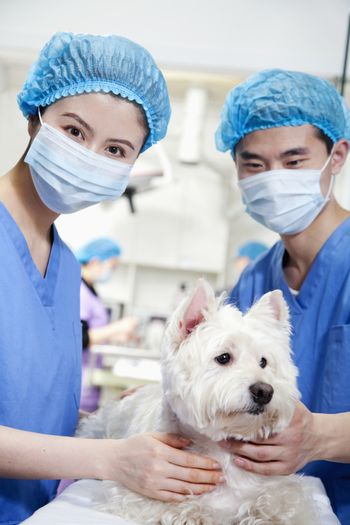 Veterinarians with dog