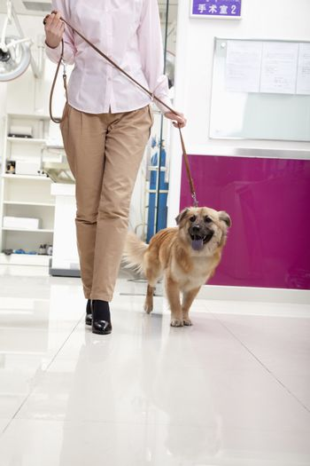 Woman walking with dog in veterinarian's office