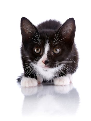 Black and white small frightened kitten.