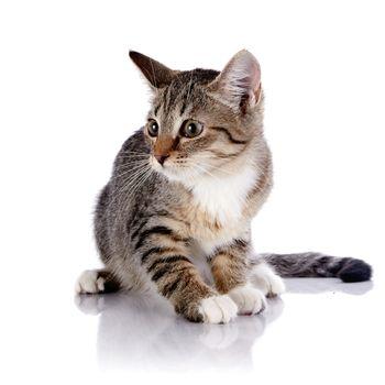 Striped scared kitten.