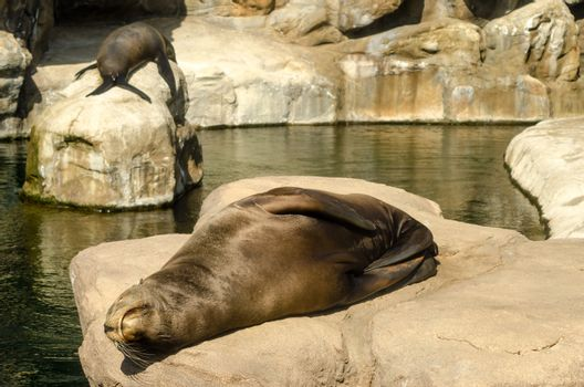 A pair of sea lions relaxing in the sun