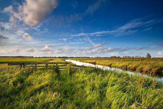 Dutch farmland in sunny day