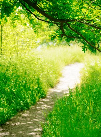 Trail in the Sunny Green Summer Forest