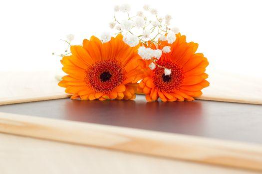 Orange gerberas and white dianthus on blank blackboard