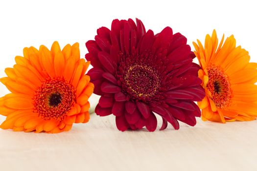 Three colourful gerberas on wooden background