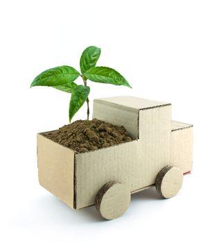 seedling in car