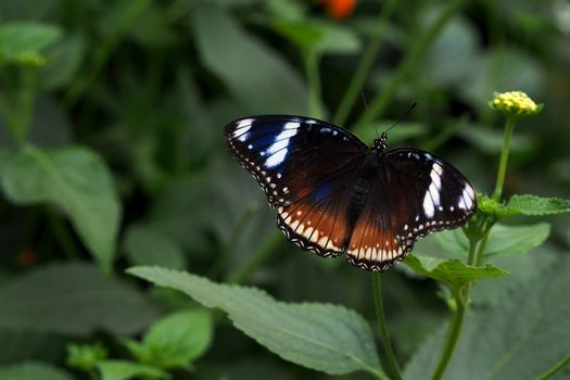 Close up photo of a beautiful butterfly