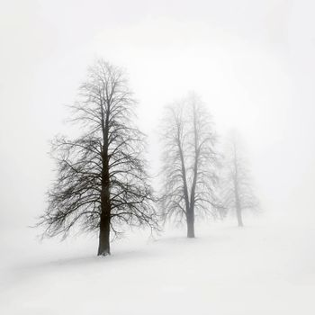 Foggy moody winter scene with leafless trees