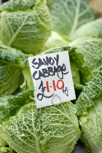 Savoy cabbage vegetable for sale
