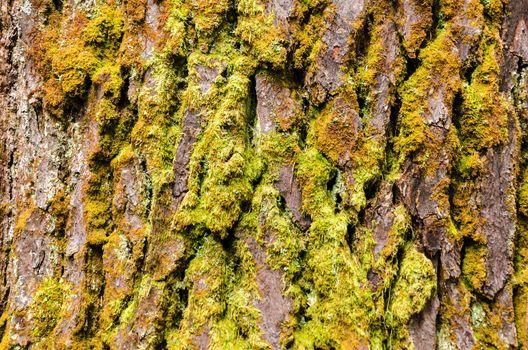 Moss covered tree bark texture