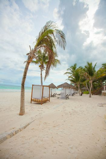 Beach beds near big palmtree at tropical exotic white plage