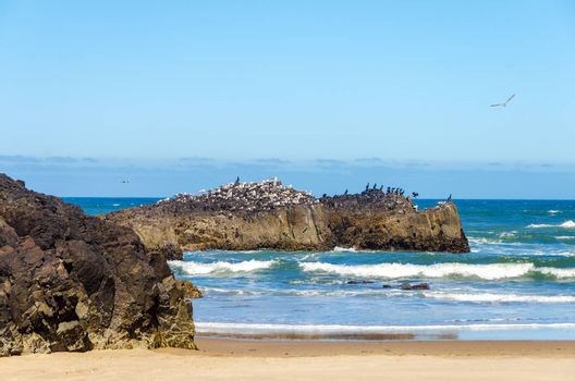 Rocky outcrop at the Oregon coast with hundreds of seabirds on it