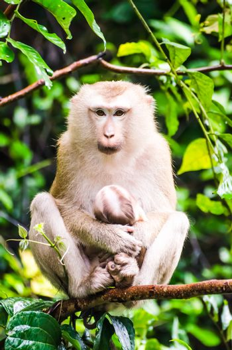 Monkey in Tropical rainforest.