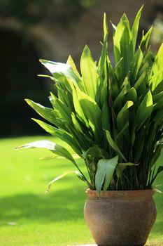 Pot plant in a garden