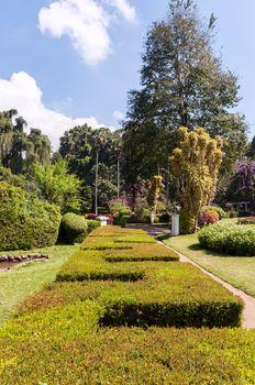 Alley with hedge in Royal Botanical Gardens, Peradeniya.