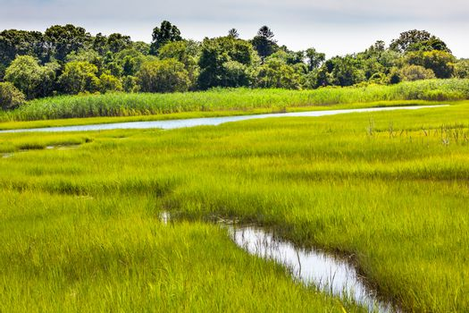 Padnaram Green Salt Water Marsh Dartmouth Massachusetts
