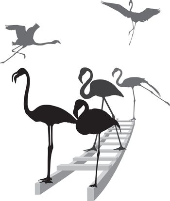 Flamingos on the ladder in grayscale